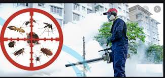 Pest Control Services In Singapore